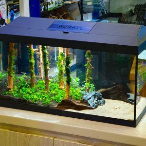 Jungle Aquascape