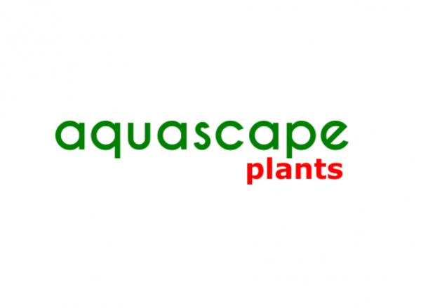 aquascapeplants